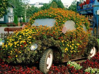 обои Автомобиль цветочная клумба фото