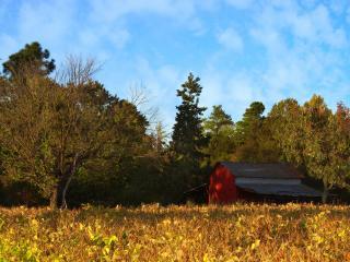 обои Сарай у поля в лесу фото