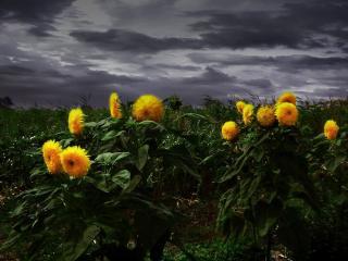 обои Непогода и яркие цветочки фото