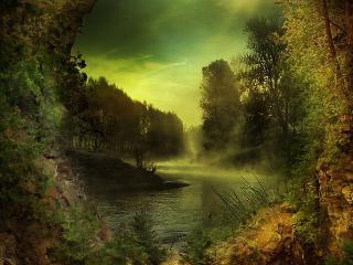 обои Просвет в зарослях леса фото