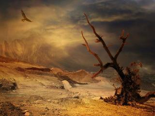обои Опустевшая земля фото