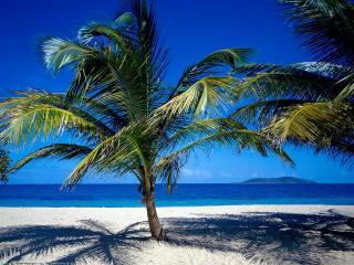 обои Пальмы на тропическом острове у воды фото