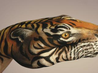 обои Рисунок на руке в виде тигра фото