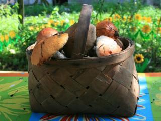 обои Лукошко грибов фото