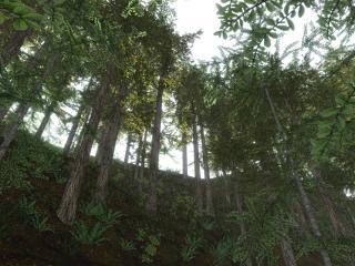 обои Лес снизу вверх фото