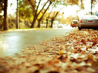 обои Осенние листья на обочине фото