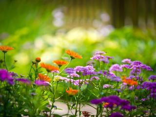 обои Разноцветные цветы фото