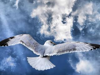 обои Чайка в небе фото