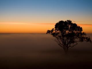 обои Пустынное дерево фото