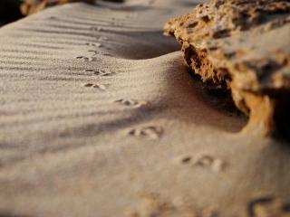 обои Песочные следы фото