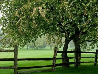 обои Забор под деревом фото