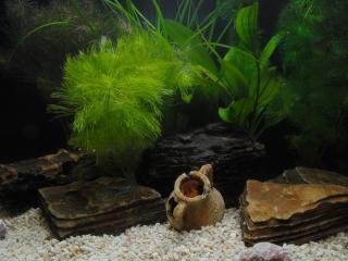 обои Дно экзотического аквариума фото