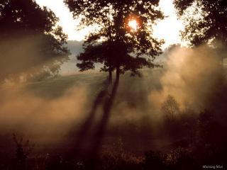 обои Деревья в летней роще, на закате, в тумане фото