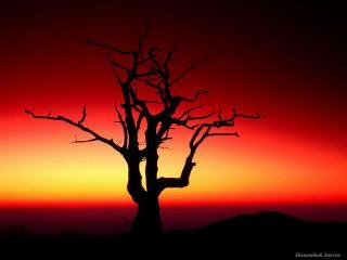 обои Весеннее дерево на фоне красного заката фото