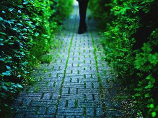 обои Зеленая дорожка фото