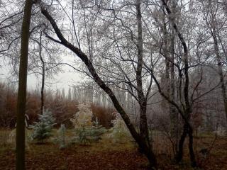 обои В ожидании зимы фото