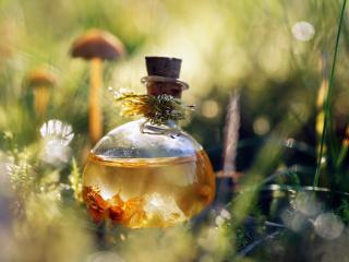 обои Духи - Флакон на траве фото