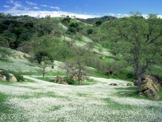 обои Холмистая долина в белых цветах фото