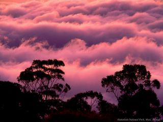 обои Розоватые облака над лесом фото