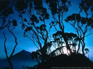обои Синее небо сквозь черные кустарники фото