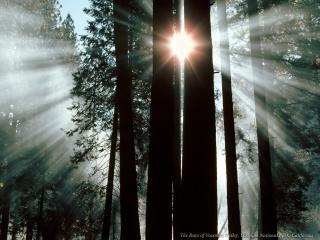 обои Солнце между деревьями фото