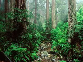 обои Чаща густого зеленого леса фото