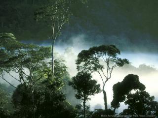 обои Туман высоко над лесом фото