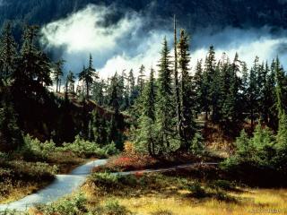 обои Хвоиный лес поздней осенью фото