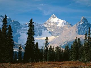 обои У подножья гор растет хвойный лес фото