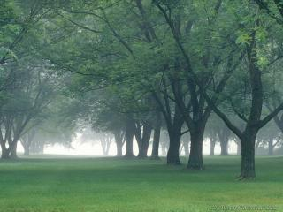 обои Туман в зеленой роще фото