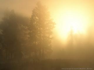 обои Свет сквозь туман в лесу фото