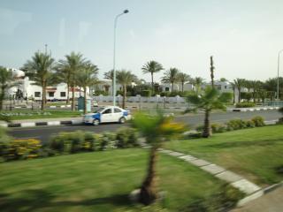 обои Пальмы южного города фото
