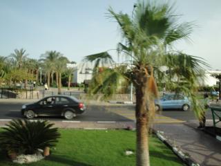 обои Египетская пальма фото