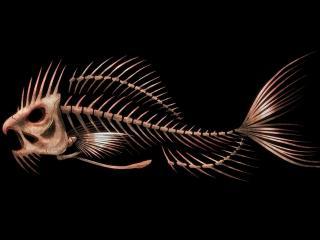 обои Скелет доисторической рыбы фото