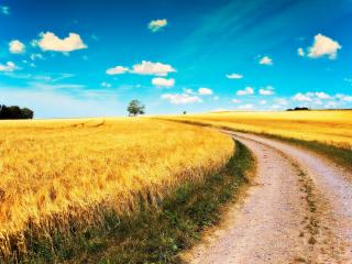 обои Дорога в поле фото
