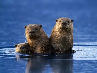 обои Животные вынырнули из воды фото
