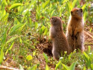 обои Маленькие животные в траве фото