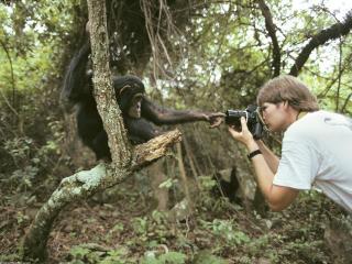 обои Снимает обезьяну фото