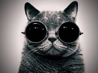 обои Кот в очках фото