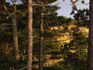 обои Вид из бора на берег моря фото