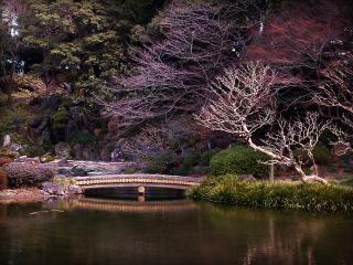 обои Мостик через  весенний пруд, ландшафтный дизайн сада фото
