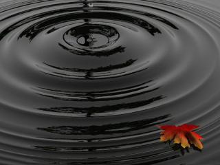 обои Капля воды осенний лист фото