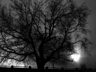 обои Темное дерево в ночи фото