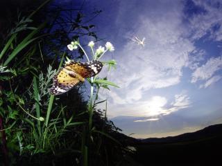 обои Вечернее небо и бабочка фото