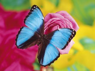 обои Крылышки в черный и голубой цвет фото
