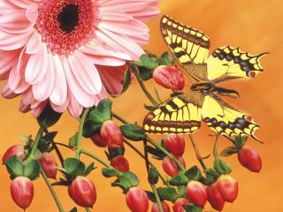 обои Пестрая бабочка,   плоды и цветок фото