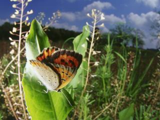 обои Бабочка в пасмурную погоду фото