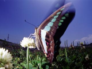 обои Бабочка на поле цветов фото