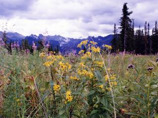 обои Цветы на фоне гор вдалеке фото