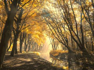 обои Аккуратная речушка,   желтые деревья фото